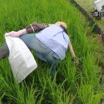 【画像】朝日放送女性アナウンサー・津田理帆さん、農作業のお手伝い中にはしたないお尻?